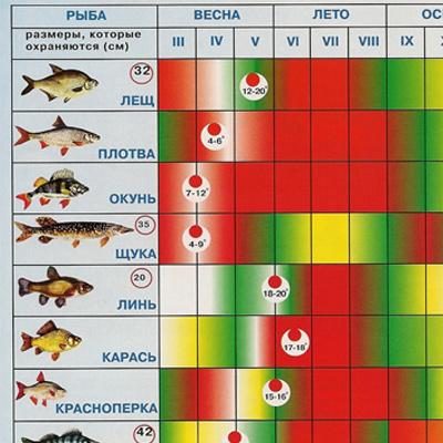 прогноз ловли рыбы на завтра кировоград